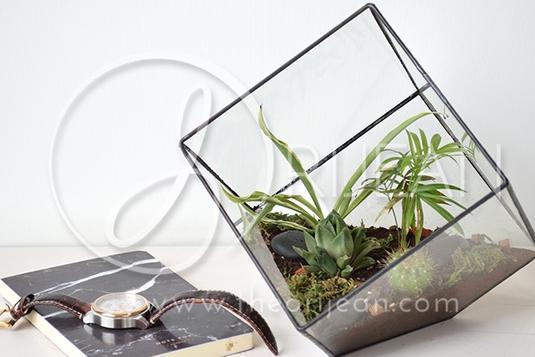 Geometric Plant Terrarium Workshop Terrarium Workshops In